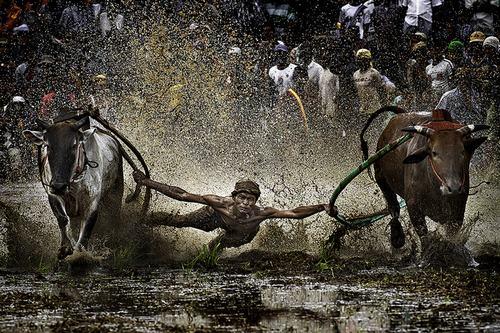 Trong số hơn 1.200 tác giả tham gia gửi ảnh, nhiếp ảnh gia Indonesia đã thuyết phục được Hội đồng nghệ thuật của triển lãm chọn trao Cup với tác phẩm