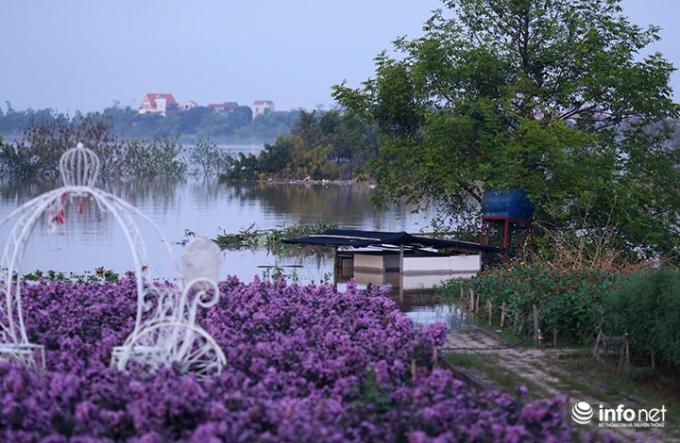 Vườn hoa bãi đá Sông Hồng - một địa điểm chụp ảnh rất nổi tiếng đối với giới trẻ Hà Nội cũng bị nhấn chìm trong nước.