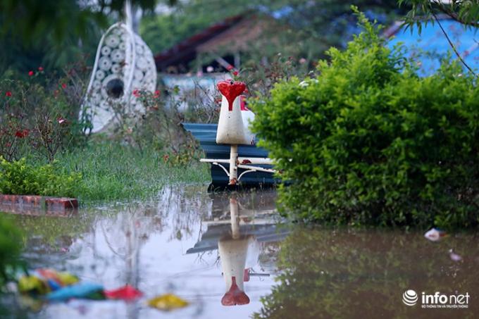 Theo quan sát của phóng viên Infonet, trong chiều ngày 12/10 vẫn có một số người ra đây chụp ảnh nhưng để đảm bảo an toàn nên chủ vườn hoa không cho lại gần khu vực ngập nước.