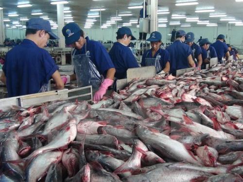 Kim ngạch xuất khẩu cá tra tăng cao. Ảnh minh họa: TTXVN