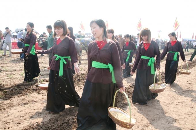 Những cô gái gieo hạt vào các đường cày.
