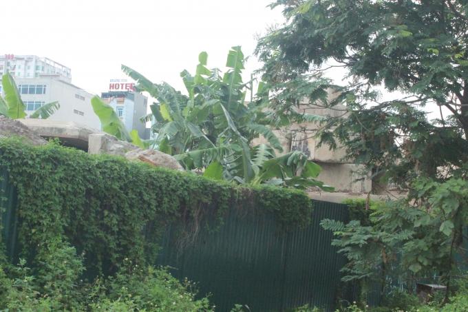 Đã có những khối bê tông đầu tiên nhưng đã bị cây dại xâm lấn.