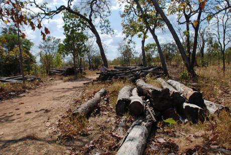 Đăk Lắk: Phá nát rừng Ea Súp