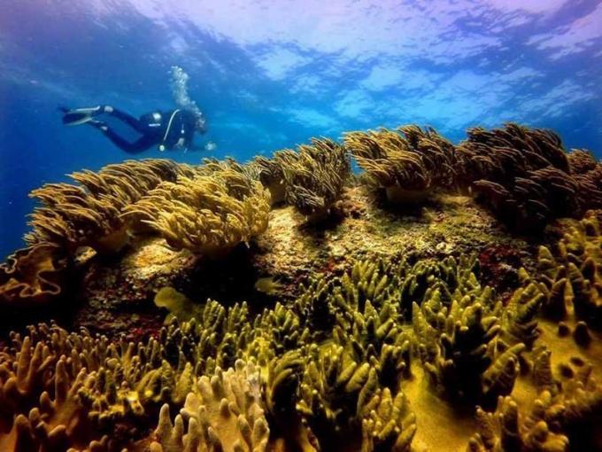 Nóng: Không nhận chìm 1 triệu m3 bùn cát xuống biển!