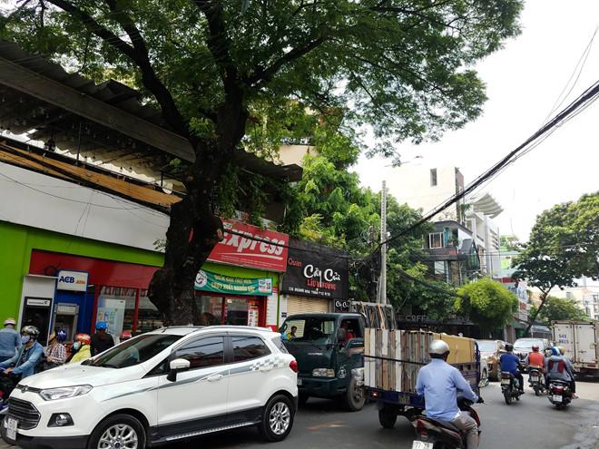 Cây xanh trên đường Hoàng Hoa Thám (quận Tân Bình) sẽ được di dời, đốn hạ để mở rộng đường. Ảnh:Phước Tuần