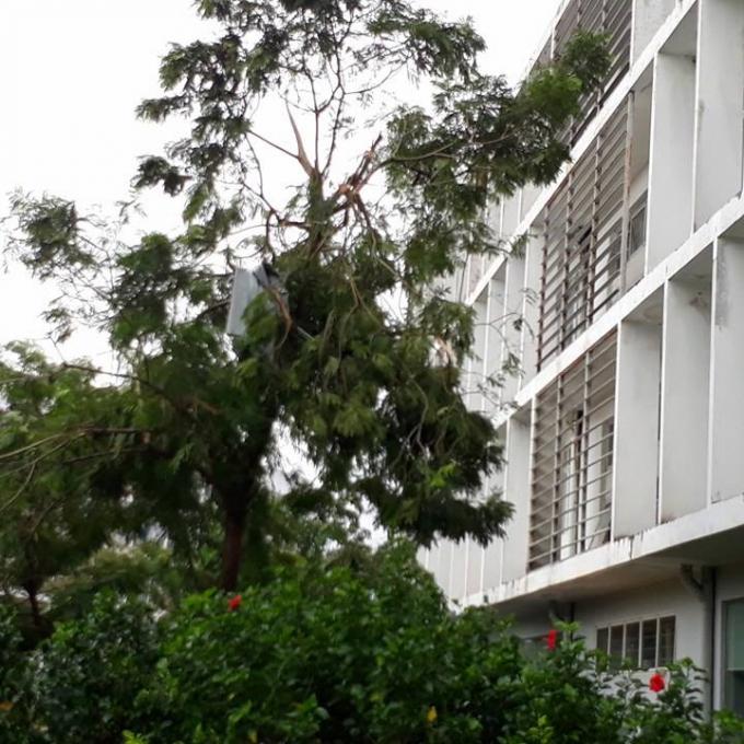 Miếng tôn còn vướng trên ngọn cây.