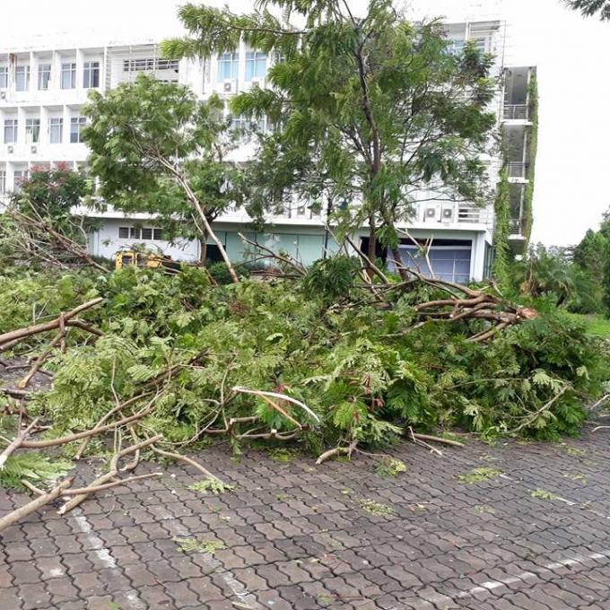 Rất nhiều cây bị đổ gãy.