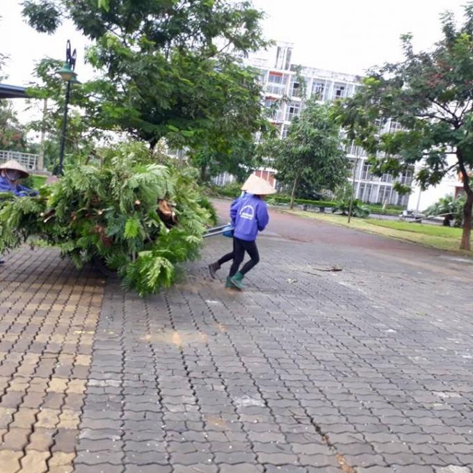Công nhân dọn dẹp cây đổ gãy.