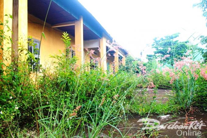 Nhiều phòng học, Sở GD&ĐT tỉnh Gia Lai khẳng định chuyển đổi công năng tuy nhiên cỏ mọc um tùm, không duy tu bị xuống cấp nghiêm trọng.