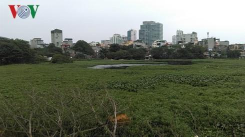 Hồ Linh Quang bị thu hẹp do bị lấn chiếm.