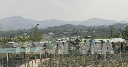 Lều, chòi được dựng tạm bợ ngay tại khu vực đất sản xuất ở phường Thống Nhất thành phố Kon Tum. Ảnh: Cao Nguyên - TTXVN