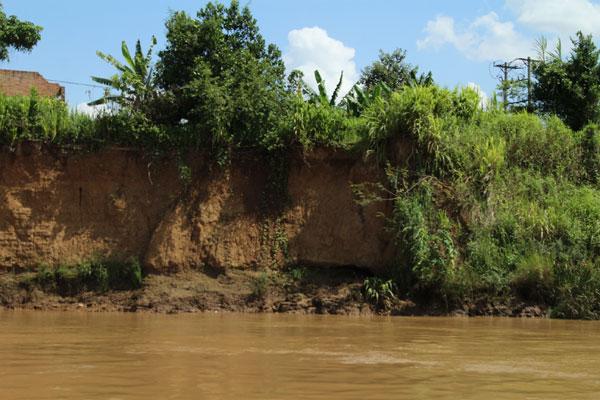 Dọc bờ sông Đồng Nai nhiều đoạn bị sạt lở nghiêm trọng.