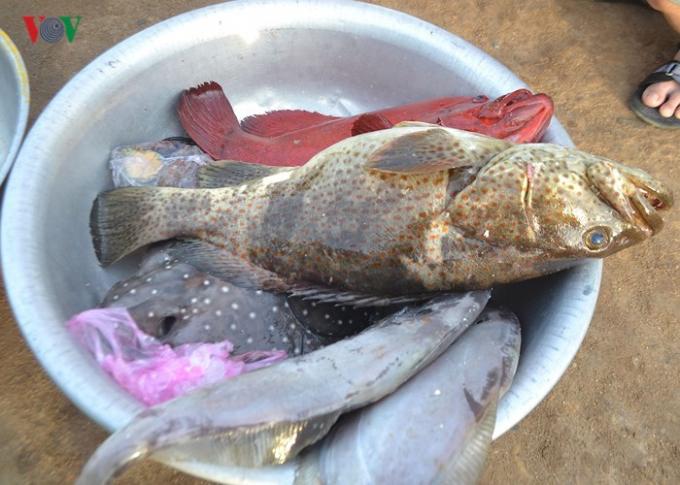 Nét độc đáo của phiên chợ cá ở đảo Lý Sơn