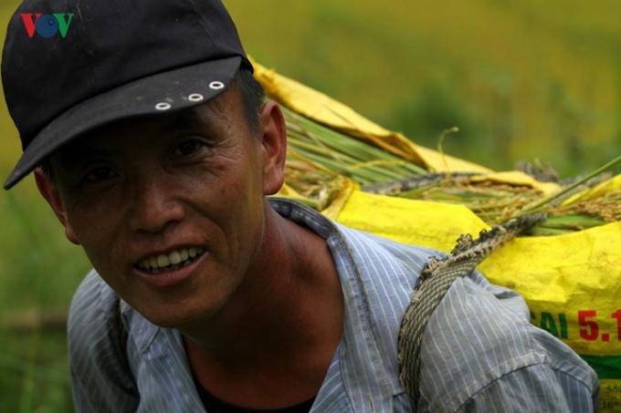 Đàn ông là lực lượng chính để vận chuyển lúa từ ruộng về nhà.