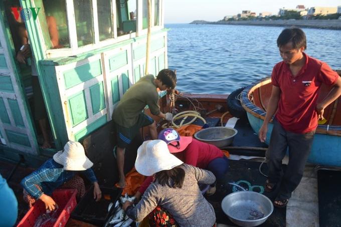 Việc mua cá không chỉ nhộn nhịp trên bờ mà còn diễn ra trên tàu cá khi tàu cập bờ.