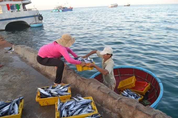 Cá, hải sản được đưa vào bờ bằng thúng chai.