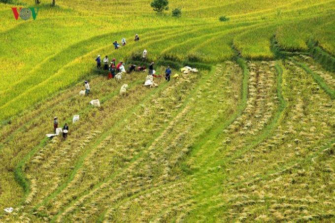 Dưới bàn tay lao động cần cù của người dân, các sườn núi đã biến thành những thửa ruộng bậc thang.