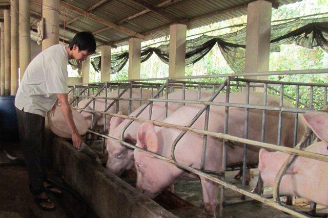 Giá thịt lợn đang có xu hướng giảm sau khi Bộ NN-PTNT họp khẩn khống chế giá