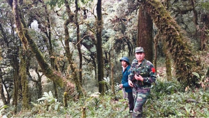 Thiếu úy Lư Văn Thuấn cùng anh Phàn Vần Lỷ giữa rừng chè cổ thụ xã Mồ Sì San. Ảnh: Kim Nhượng