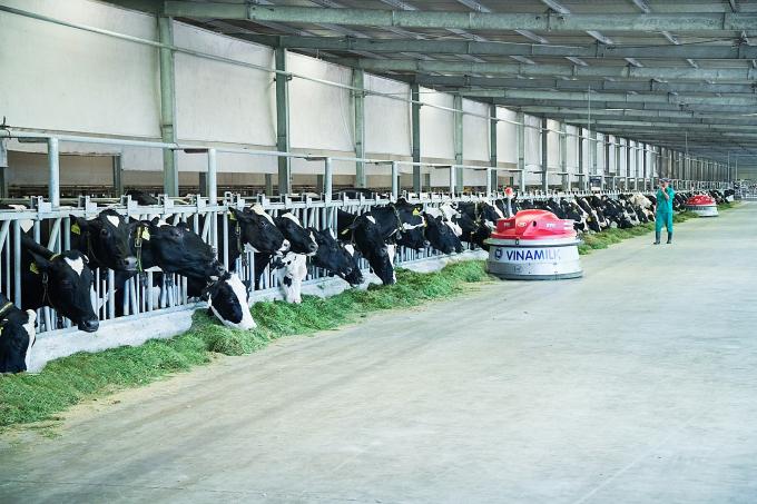 """Hệ thống chuồng nuôi tại """"Resort"""" bò sữa Tây Ninh được đầu tư công nghệ hiện đại trên thế giới, nổi bật với hệ thống làm mát tự động tiên tiến"""