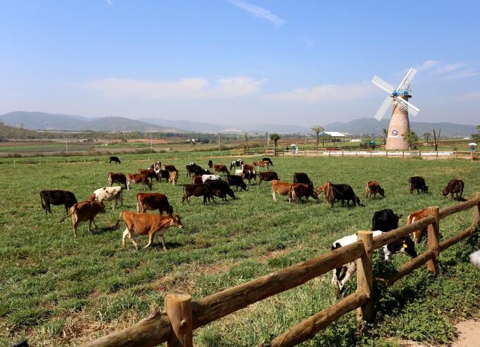 Ngoài các trang trại bò sữa Organic tại Việt Nam, Vinamilk đã đầu tư xây dựng một dự án tổ hợp trang trại Organic tại Lào với quy mô 4.000 con