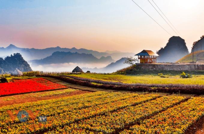 Thảo Nguyên Yên Trung – Lục Yên – Yên Bái được ví như Đà Lat thứ 2 của vùng Tây Bắc