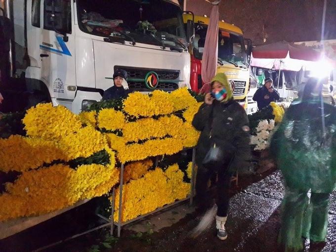 Cúc vàng được xếp gọn gàng.