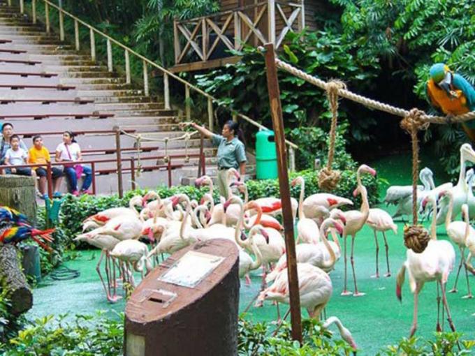 Vườn chim Jurong nổi tiếng ở Singapore. Ảnh: Internet.