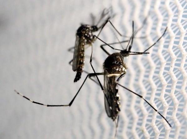 Virus Zika có thể tấn công tế bào thần kinh của người lớn