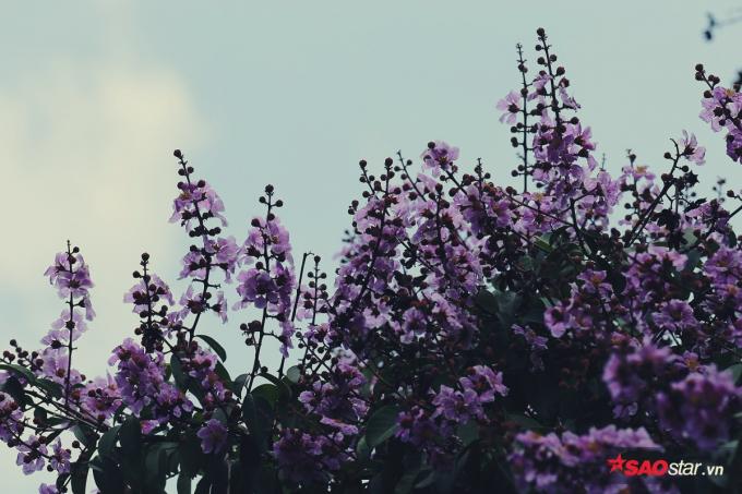 Giữa tháng 5 là khoảng thời gian hoa nở rộ, lá bay biến đi đâu chỉ nhìn thấy toàn hoa.