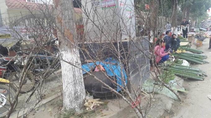 Cây đào và ống lùng bán tại chợ Thị trấn Kim Sơn chiều 28 tết.