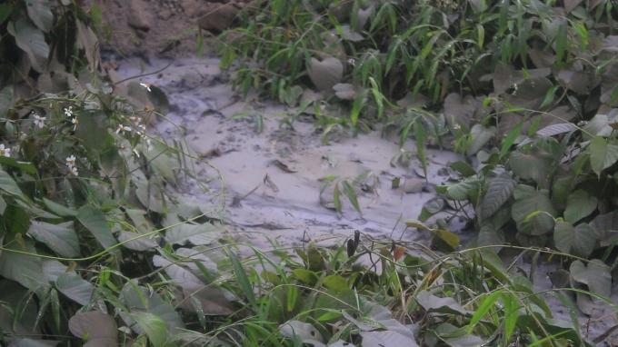 Vùng đất bị Công ty Cổ phần Xi măng Phú Thọ xả thải trực tiếp ra môi trường cô cứng như tấm bê tông được đổ cố định.