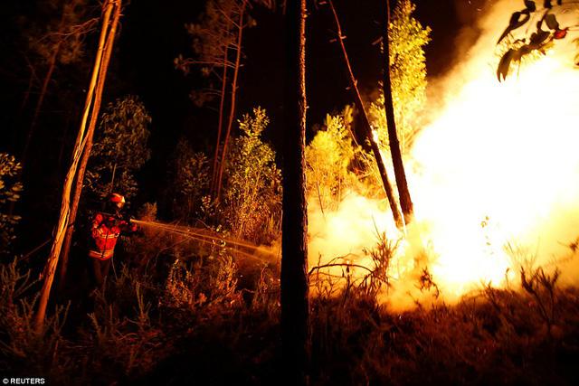 Từ ngày 17/6, khi đám cháy bùng phát, đã có 600 lính cứu hỏa đến hiện trường tham gia ngăn chặn đám cháy lan rộng. Đã có 6 lính cứu hỏa bị thương khi nỗ lực giải cứu khu rừng. (Ảnh: Reuters)