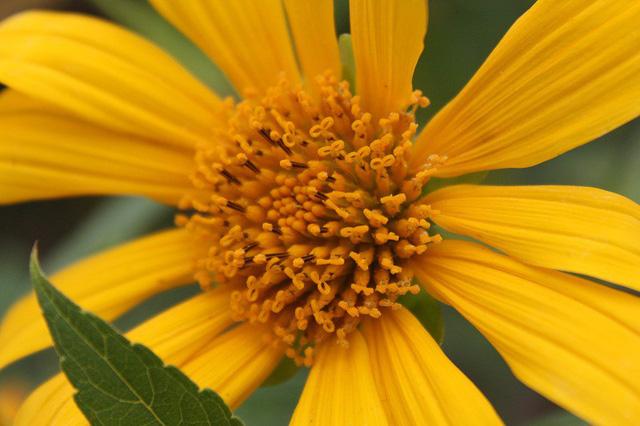 Cùng ngắm nhìn một số hình ảnh ghi lại không khí tại Vườn quốc gia Ba Vì