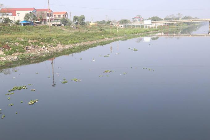 Dù nước sông Nhuệ bị ô nhiễm nhưng vẫn phải sử dụng để gieo trồng kịp thời vụ.