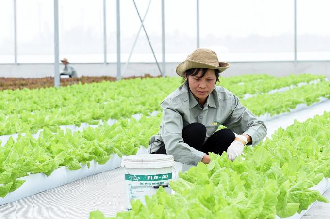 Nông trường công nghệ cao hiện đại VinEco Hà Nam.