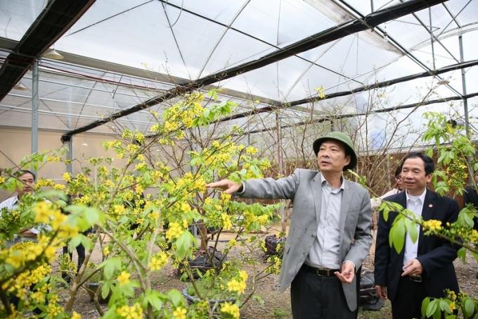 Trong khuôn khổ của lễ hội sẽ có triển lãm trưng bày Hoa Anh Đào (50 cây), Hoa Mai vàng Yên Tử (60 cây) và sinh vật cảnh.