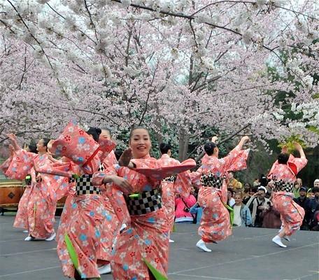Hoa anh đào và văn hóa Nhật Bản sẽ níu chân du khách khi về với