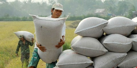 Muốn có thương hiệu cho gạo Việt, đòi hỏi khó nhất là người nông dân phải thay đổi tư duy, tập quán canh tác