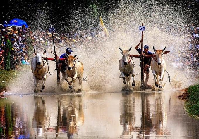 Sự đồng hành của Nước tăng lực Number 1 ngày càng góp phần đưa giải Đua bò Bảy Núi tiến xa hơn ra với người dân cả nước và bạn bè thế giới.