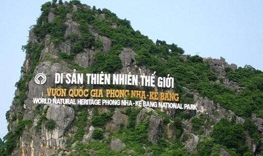 Rừng Phong Nha – Kẻ Bàng: Bị lùng sục để khai thác gỗ hương giáng