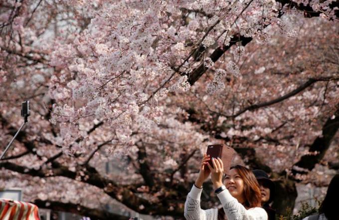 Mọi người thích thú chụp ảnh tự sướng cùng hoa.