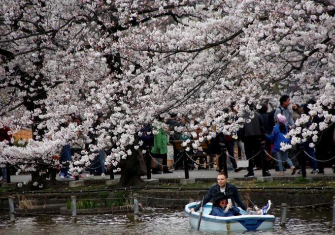 Du khách đi thuyền dưới những tán anh đào tại công viên Ueno ở Tokyo.