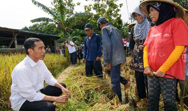 Tăng trưởng kinh tế của Indonesia vẫn dao động ở mức trên 5% và Tổng thống Joko Widodo (trái) đang rất lo lắng cho các mục tiêu kinh tế chủ yếu trong nhiệm kỳ của mình.