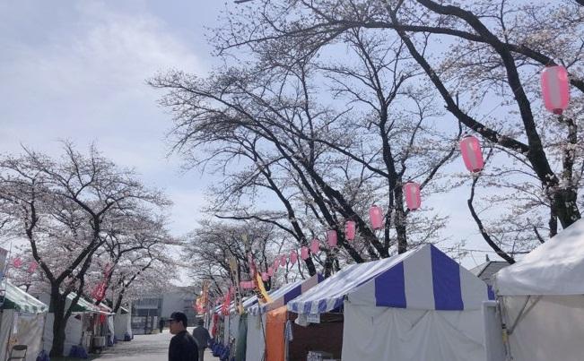 Nhật Bản: Hoa anh đào nở đẹp say đắm lòng người