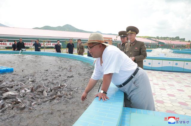 Báo Rodong Sinmun, cơ quan ngôn luận của đảng Lao động Triều Tiên, ngày 8/8 đưa tin nhà lãnh đạo Kim Jong-un gần đây đã tới thăm một cơ sở sản xuất cá ngâm do quân đội Triều Tiên vận hành ở Kumsanpo, tỉnh Nam Hwanghae.