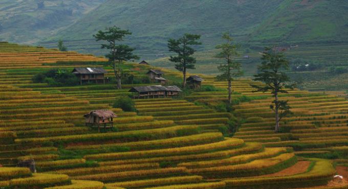 Cảnh sắc yên bình của vùng quê trù phú