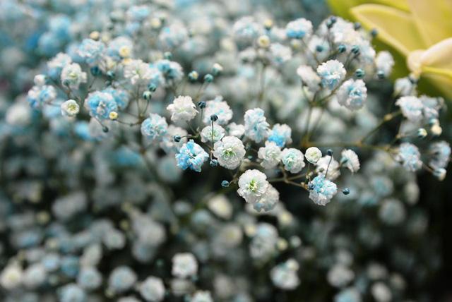 Thị trường 20/10: Xuất hiện nhiều loại hoa có tên...