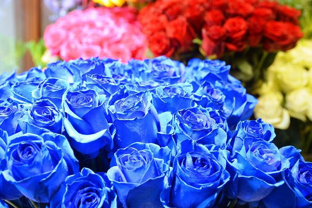 """Ngoài những loại hoa """"độc"""" thì các loại hoa hồng đủ sắc màu cũng được bày bán nhiều trên thị trường."""
