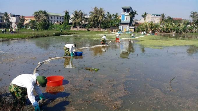 Các công nhân dùng phao thấm dầu để xử lý vết dầu loang trên cánh đồng. Ảnh: Quách Du.